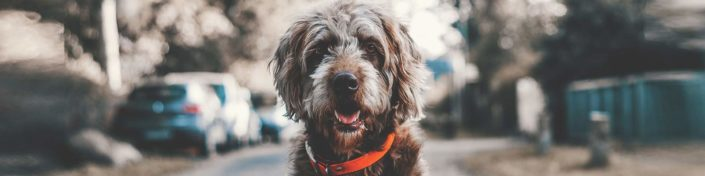 top 10 hundefriseur wien